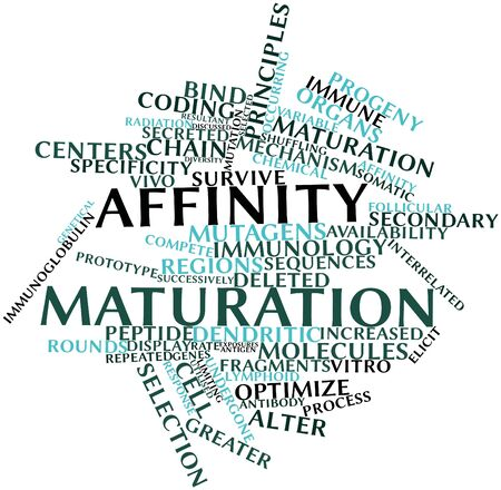 elicit: Abstract word cloud for Affinity maturation with related tags and terms