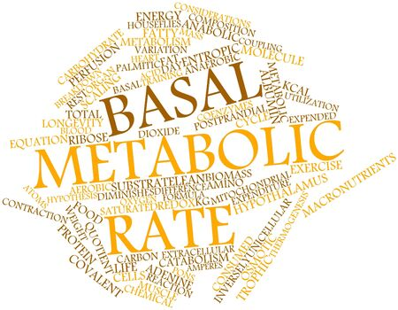 the energy center: Abstract word cloud for Basal metabolic rate with related tags and terms