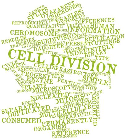 Abstract word cloud for Cell division with related tags and terms