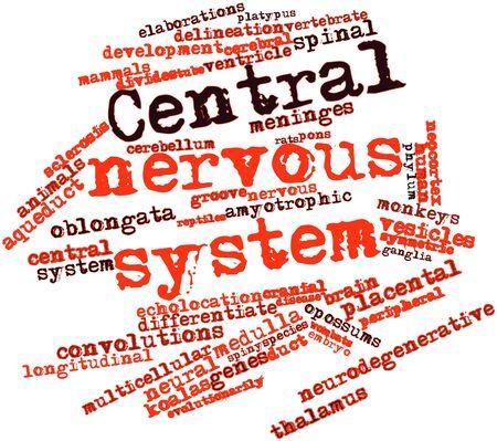sistema nervioso central: Nube palabra abstracta para el sistema nervioso central con las etiquetas y t�rminos relacionados