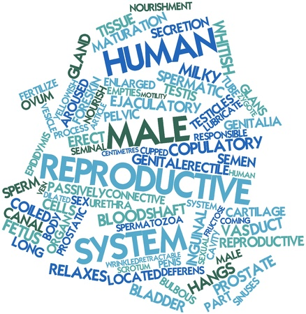 reproductive system: Abstract word cloud for Human male reproductive system with related tags and terms Stock Photo