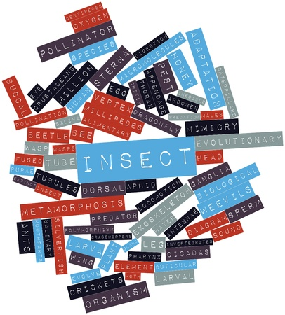 vertex: Abstract word cloud for Insect with related tags and terms Stock Photo