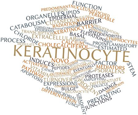 extracellular: Abstract word cloud for Keratinocyte with related tags and terms Stock Photo