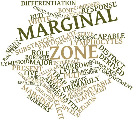 antigen response: Abstract word cloud for Marginal zone with related tags and terms
