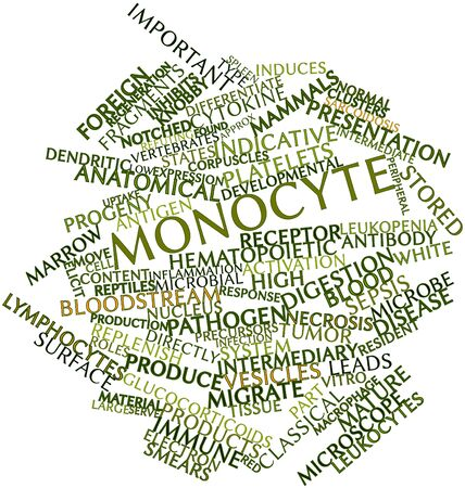 Abstract word cloud for Monocyte with related tags and terms Stock Photo - 16720914