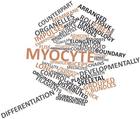 elongacion: Nube palabra abstracta para los miocitos con etiquetas y términos relacionados Foto de archivo