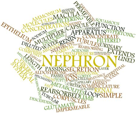 Abstract word cloud for Nephron with related tags and terms Stock Photo - 16720690