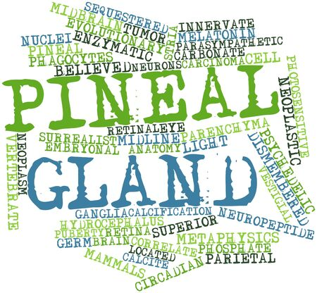 surrealist: Abstract word cloud for Pineal gland with related tags and terms