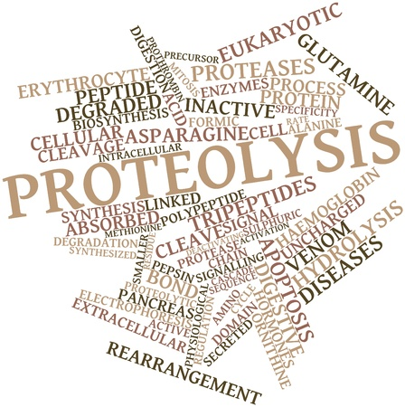 precursor: Abstract word cloud for Proteolysis with related tags and terms