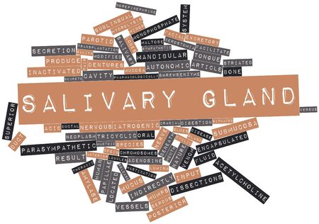Abstract word cloud for Salivary gland with related tags and terms Stock Photo - 16719630