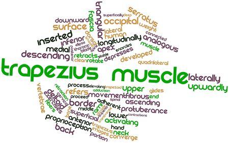 trapezius: Nube palabra abstracta para el m�sculo trapecio con las etiquetas y t�rminos relacionados