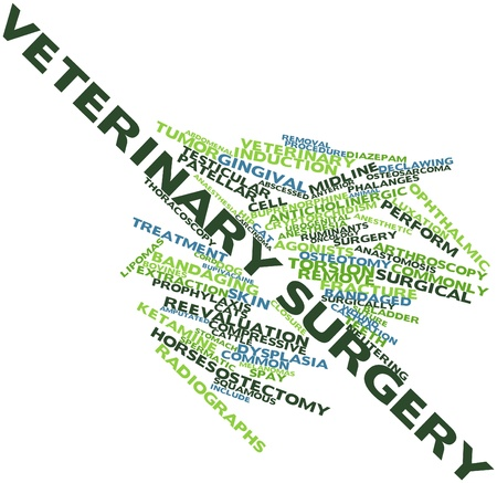 testicular cancer: Abstract word cloud for Veterinary surgery with related tags and terms