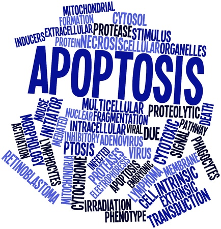 initiator: Abstract word cloud for Apoptosis with related tags and terms