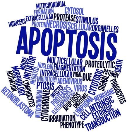 apoptosis: Nube palabra abstracta por apoptosis con las etiquetas y t�rminos relacionados Foto de archivo