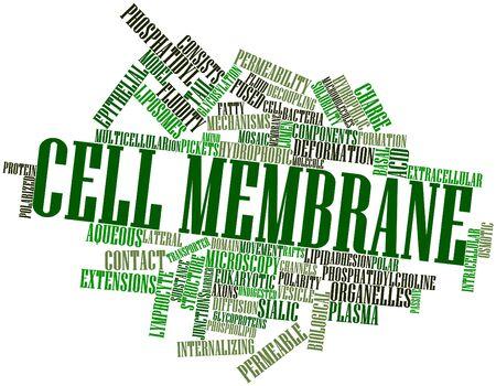 membrane cellulaire: Nuage de mots abstraits pour la membrane cellulaire avec des �tiquettes et des termes connexes