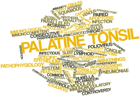 Abstract word cloud for Palatine tonsil with related tags and terms Stock Photo