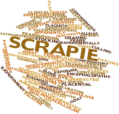 encephalopathy: Abstract word cloud for Scrapie with related tags and terms Stock Photo
