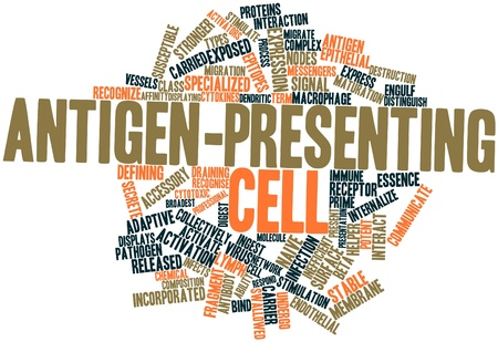 endothelial: Abstract word cloud for Antigen-presenting cell with related tags and terms