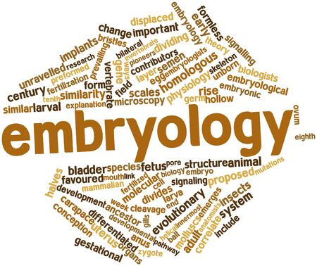 correlate: Abstract word cloud for Embryology with related tags and terms