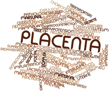 Abstract word cloud for Placenta with related tags and terms Stock Photo - 16774262