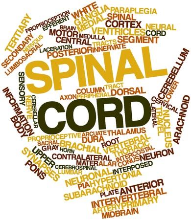 arachnoid: Word cloud astratto per il midollo spinale con tag correlati e termini