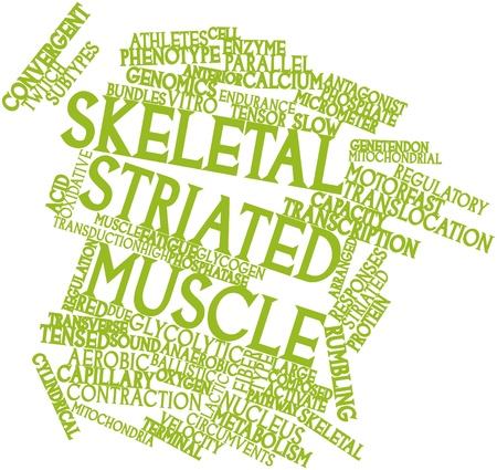 Abstract word cloud for Skeletal striated muscle with related tags and terms Stock Photo - 16888896