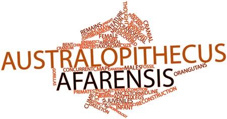 molares: Nube palabra abstracta para Australopithecus afarensis con etiquetas y términos relacionados Foto de archivo