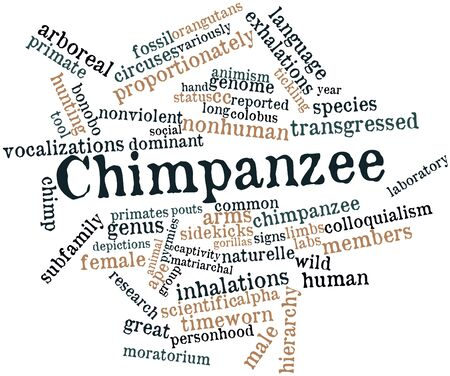 Abstract word cloud for Chimpanzee with related tags and terms Stock Photo - 16982850