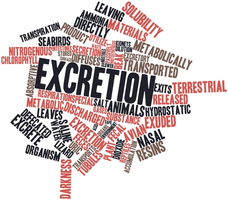 excretion: Abstract word cloud for Excretion with related tags and terms