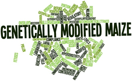 noncompliance: Abstract word cloud for Genetically modified maize with related tags and terms