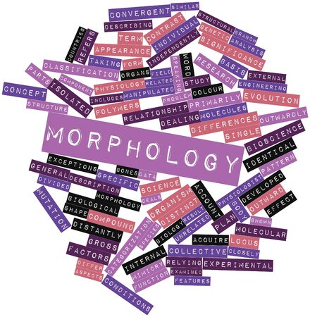 morphology: Abstract word cloud for Morphology with related tags and terms