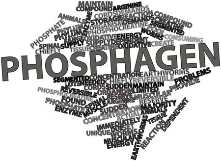 majority: Abstract word cloud for Phosphagen with related tags and terms Stock Photo