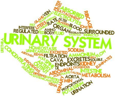 electrolytes: Abstract word cloud for Urinary system with related tags and terms