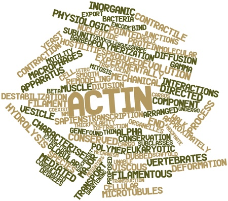 hostilities: Abstract word cloud for Actin with related tags and terms Stock Photo