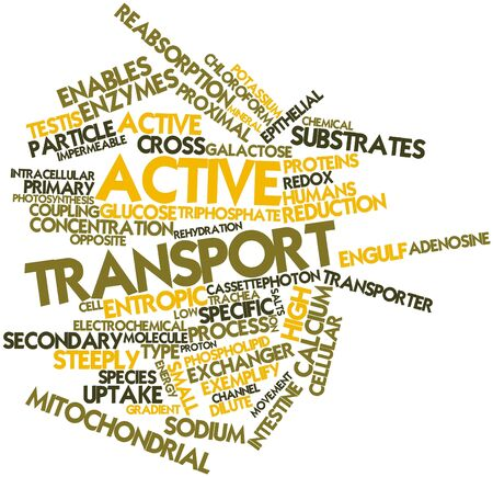 proximal: Abstract word cloud for Active transport with related tags and terms