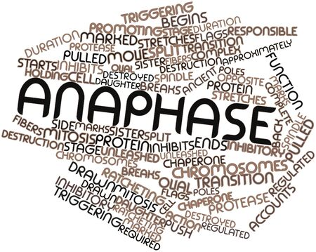 approximately: Abstract word cloud for Anaphase with related tags and terms Stock Photo