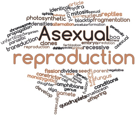 Abstract word cloud for Asexual reproduction with related tags and terms Stock Photo