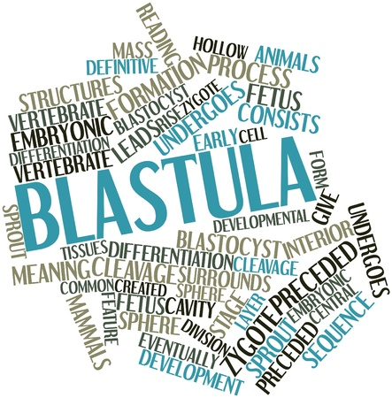 division: Abstract word cloud for Blastula with related tags and terms