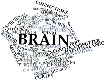 midbrain: Abstract word cloud for Brain with related tags and terms