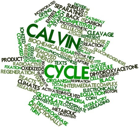 transferred: Abstract word cloud for Calvin cycle with related tags and terms Stock Photo