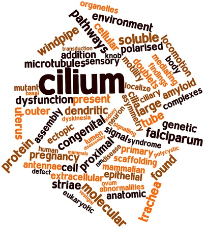 retinal: Abstract word cloud for Cilium with related tags and terms Stock Photo