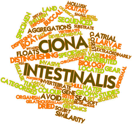 harvesters: Abstract word cloud for Ciona intestinalis with related tags and terms
