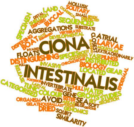 distal: Nube palabra abstracta para Ciona intestinalis con etiquetas y términos relacionados