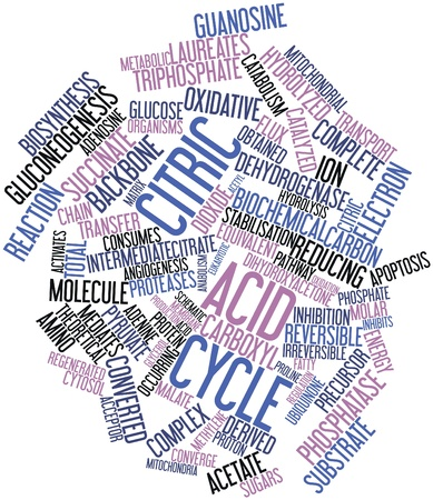 precursor: Abstract word cloud for Citric acid cycle with related tags and terms