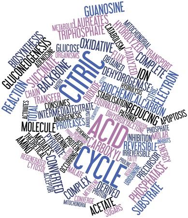 apoptosis: Nube palabra abstracta para el ciclo de �cido c�trico con las etiquetas y t�rminos relacionados