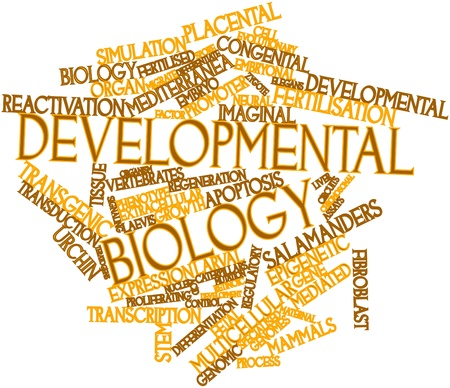 assays: Abstract word cloud for Developmental biology with related tags and terms