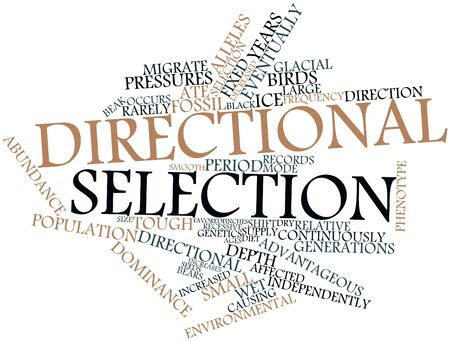 affected: Abstract word cloud for Directional selection with related tags and terms Stock Photo