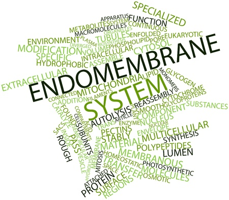subunits: Abstract word cloud for Endomembrane system with related tags and terms Stock Photo