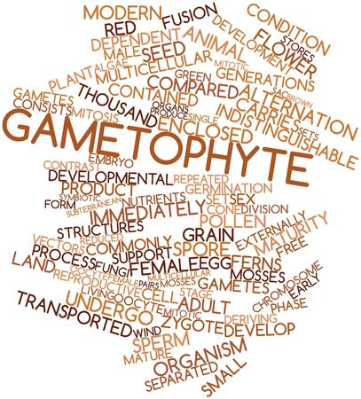 Abstract word cloud for Gametophyte with related tags and terms Stock Photo - 17024572