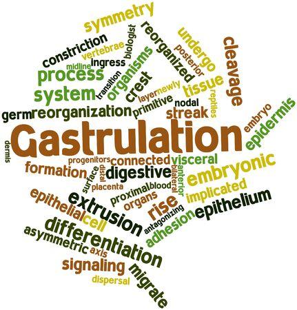 distal: Nube palabra abstracta para gastrulación con etiquetas y términos relacionados Foto de archivo